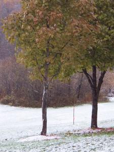 first_snow
